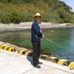 角島元山港のアオリイカ