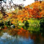 京都の紅葉、永観堂